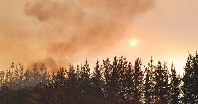 Temporada de incendios forestales cierra con un 66% menos de superficie afectada