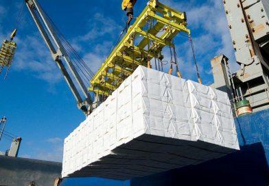 Exportaciones de Ñuble alcanzan los US$ 584 millones en primeros cinco meses de 2021