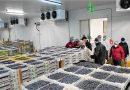 ProChile destaca crecimiento de 46% en exportaciones de Ñuble en primer trimestre